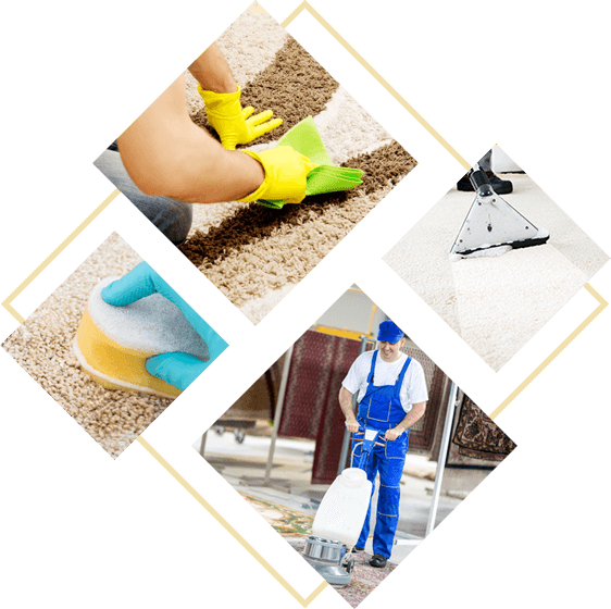Misha Carpet Cleaning – Carpet Cleaning in Melbourne